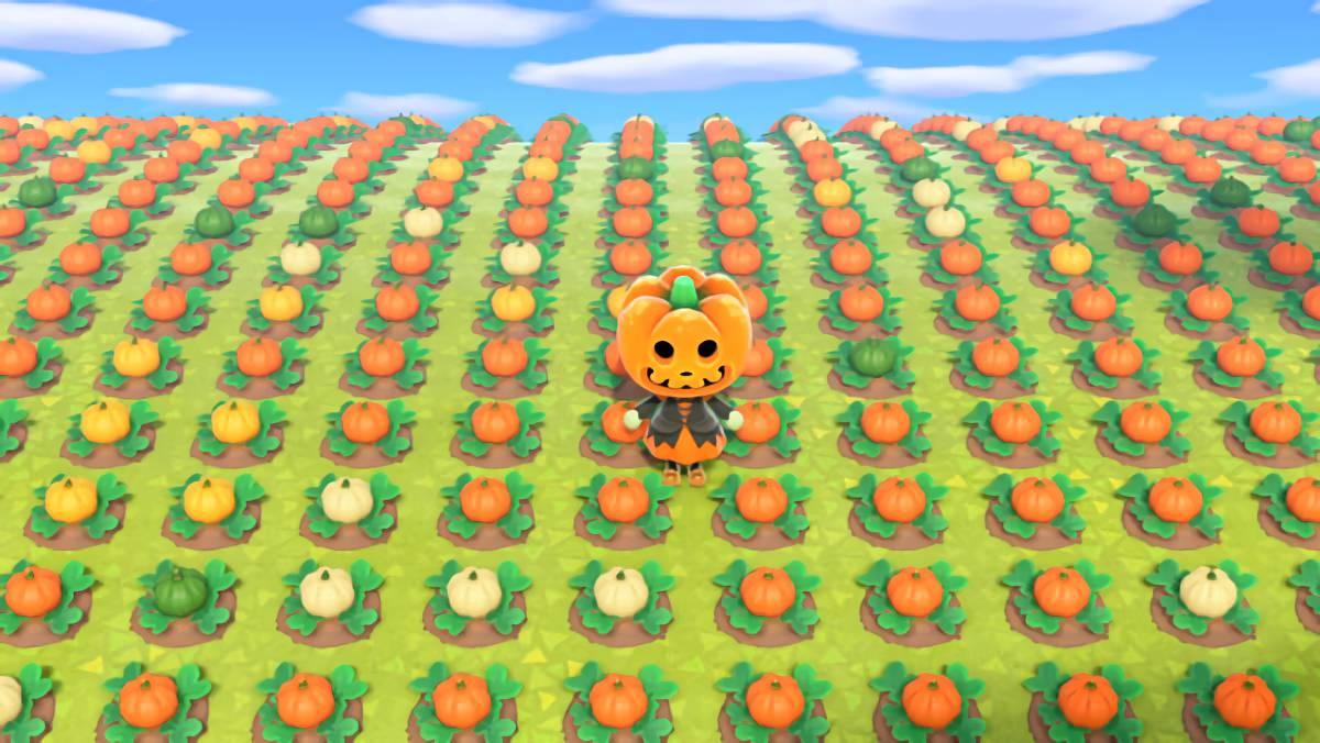 あつまれどうぶつの森 カボチャの苗1024本植えて「色の割合」を調べてみた!